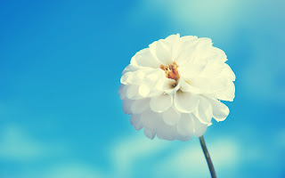 Awesome White Flower Blue HD Love Wallpaper