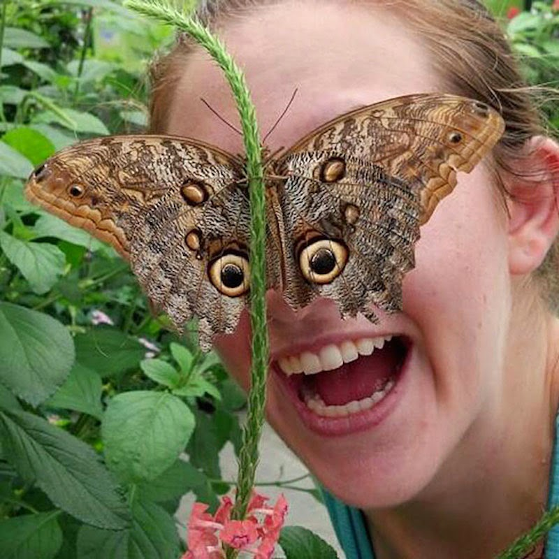 30 Pictures Taken At The Right Moment - Eyes like a butterfly!