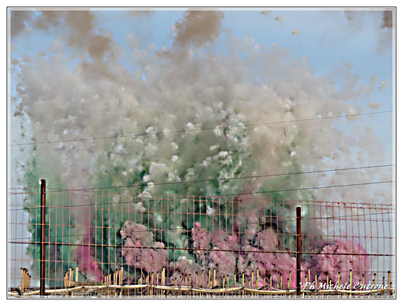 Voci e colori del sud festa patronale di san trifone 10 for Sud arredi adelfia