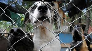 10 Formas de Cuidar a tu Perro