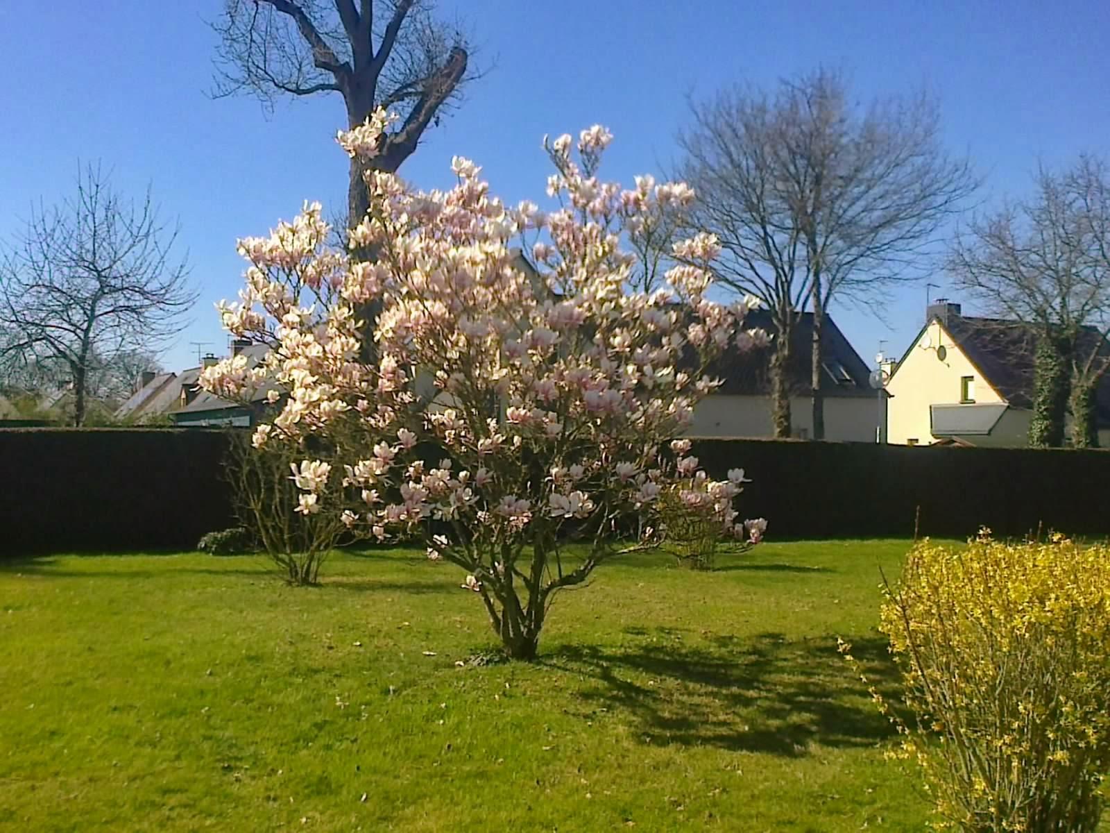 Fleuriste isabelle feuvrier dans le jardin de la maman de - Comment tailler un magnolia ...