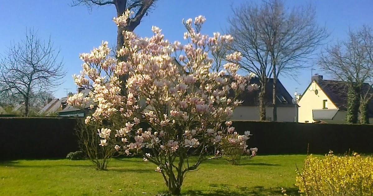 Fleuriste isabelle feuvrier dans le jardin de la maman de for Blythe le jardin de maman