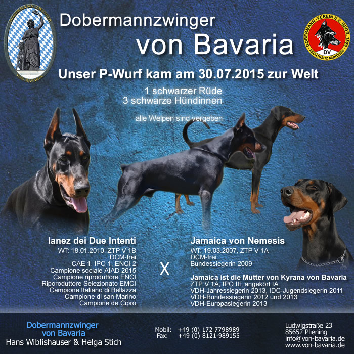 Dobermann idc 2015