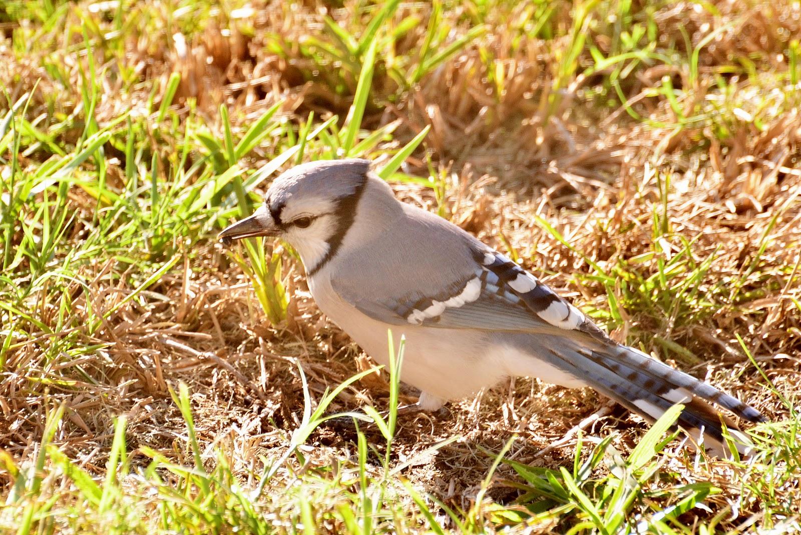 dina u0027s city wildlife adventures backyard birds