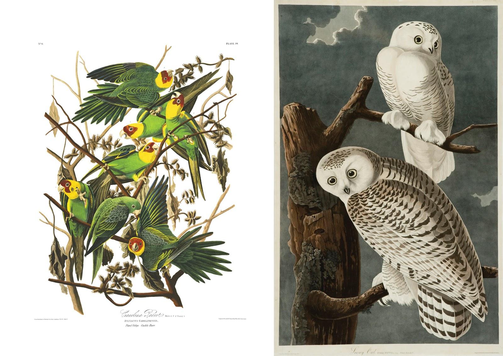 Un Petit Atelier John James Audubon