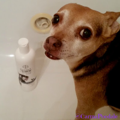 Scooby Doo in the tub with Bayer ExpertCare shampoo
