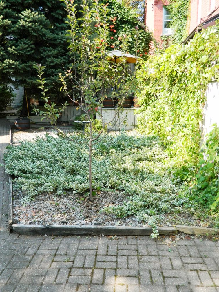 Toronto garden cleanup Cabbagetown backyard after Paul Jung Gardening Services