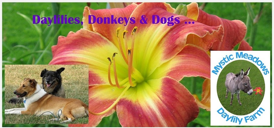 Daylilies, donkeys & dogs