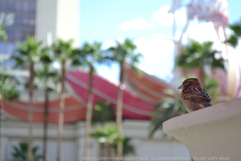 Serendipity - Las Vegas - Outdoor Patio Seating - Birds Sparrows Watching - Breakfast Brunch - Nature Travel Photography Blog