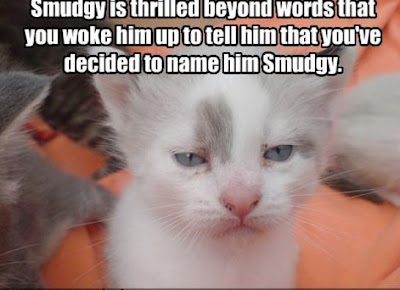 Funny cats pictures with words