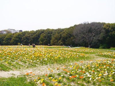 万博公園 ポピーフェア