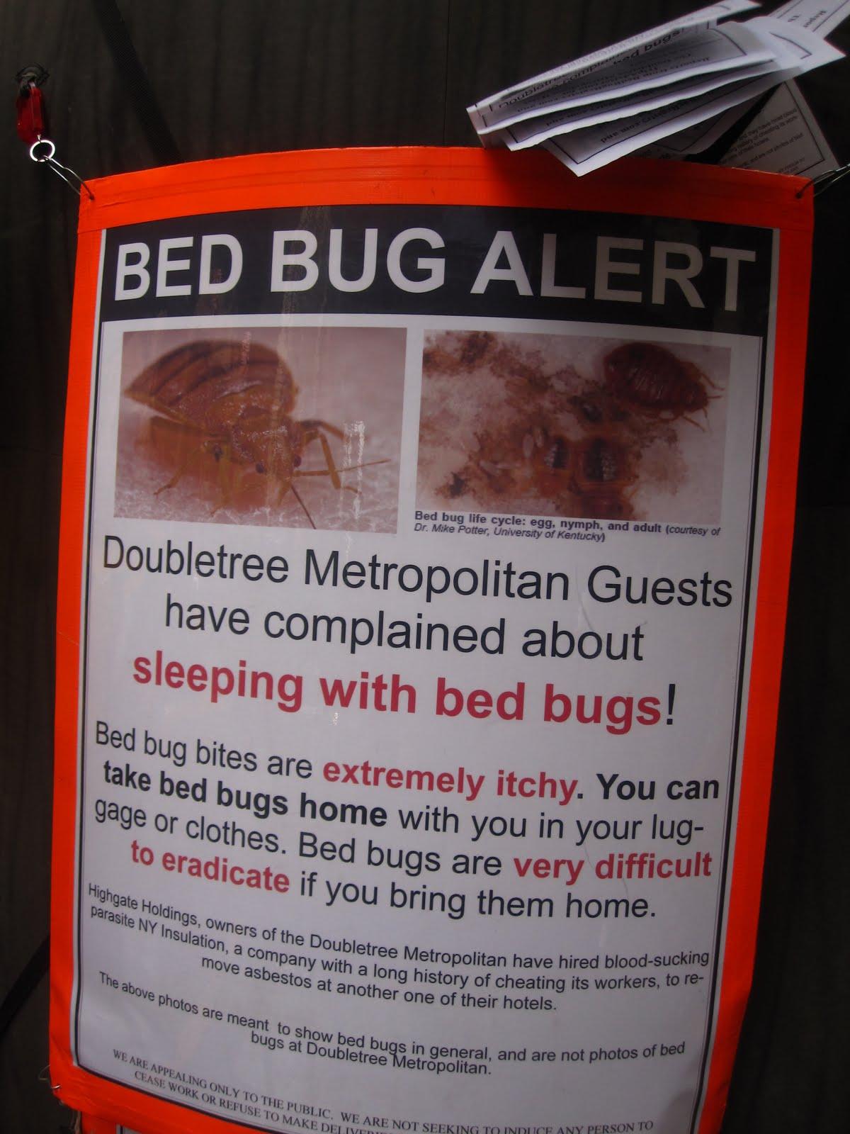 Bed bug alert ukscreen for Bed bug alert