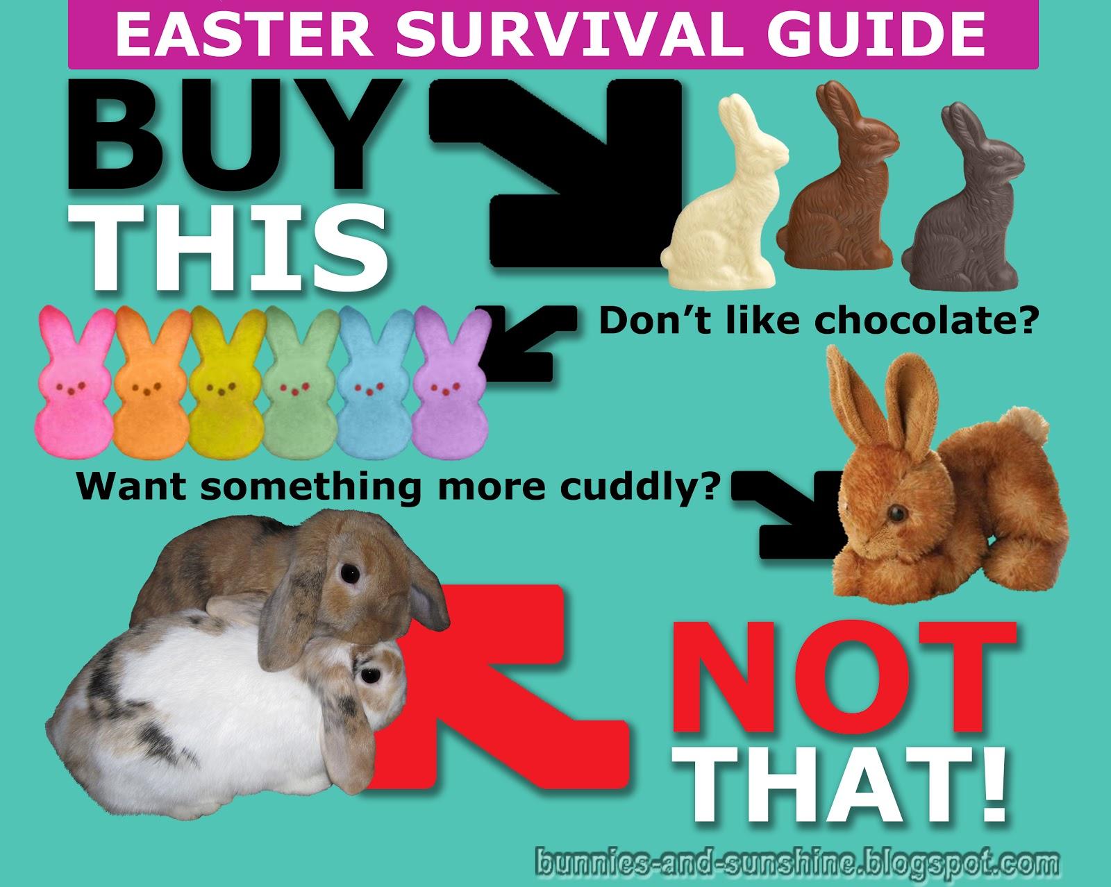 bunnies and sunshine easter bunny psa