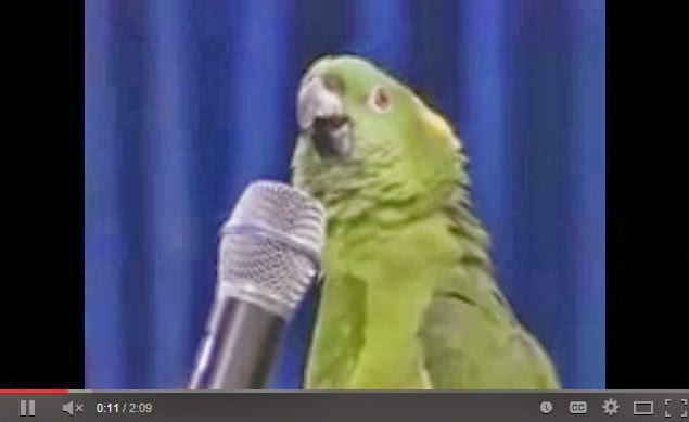 http://www.funmag.org/video-mag/mix-videos/unbelievable-singing-parrot-video/