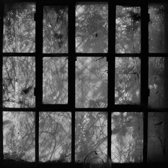 photo fenêtre envahie par la végétation dans une usine abandonnée, window of an abandoned factory, © dominique houcmant