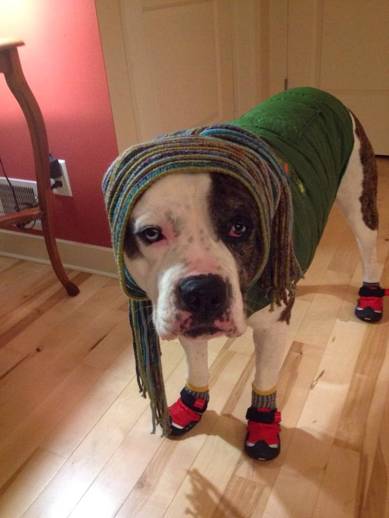 Cute dogs - part 6 (50 pics), dog wears costume makes him looks like Bob Marley