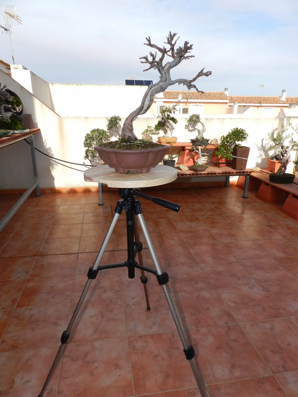 Cartagena bonsai un torno casero for Estanterias para bonsais