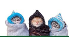 gatos com frio