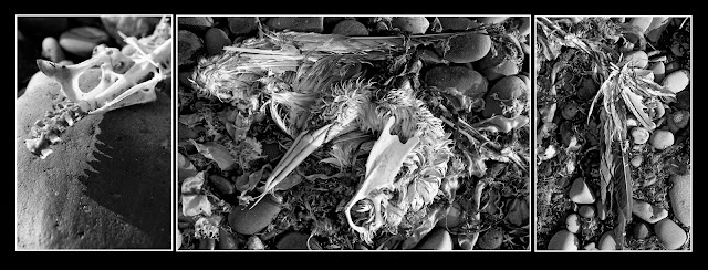 Dead; Death; Bones; Future Fossils; Decay; Skeleton; Bird; Heron