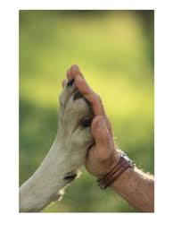 el ser humano nunca podra ser como los animales