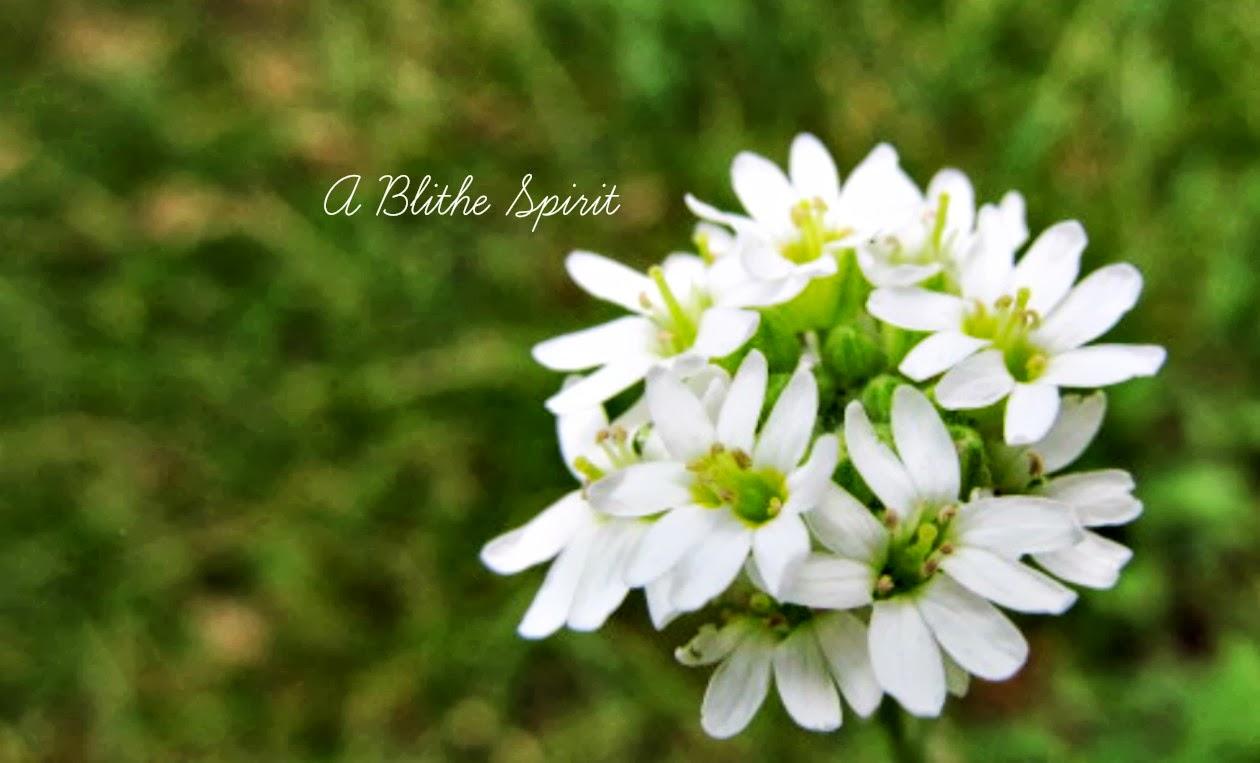 A Blithe Spirit
