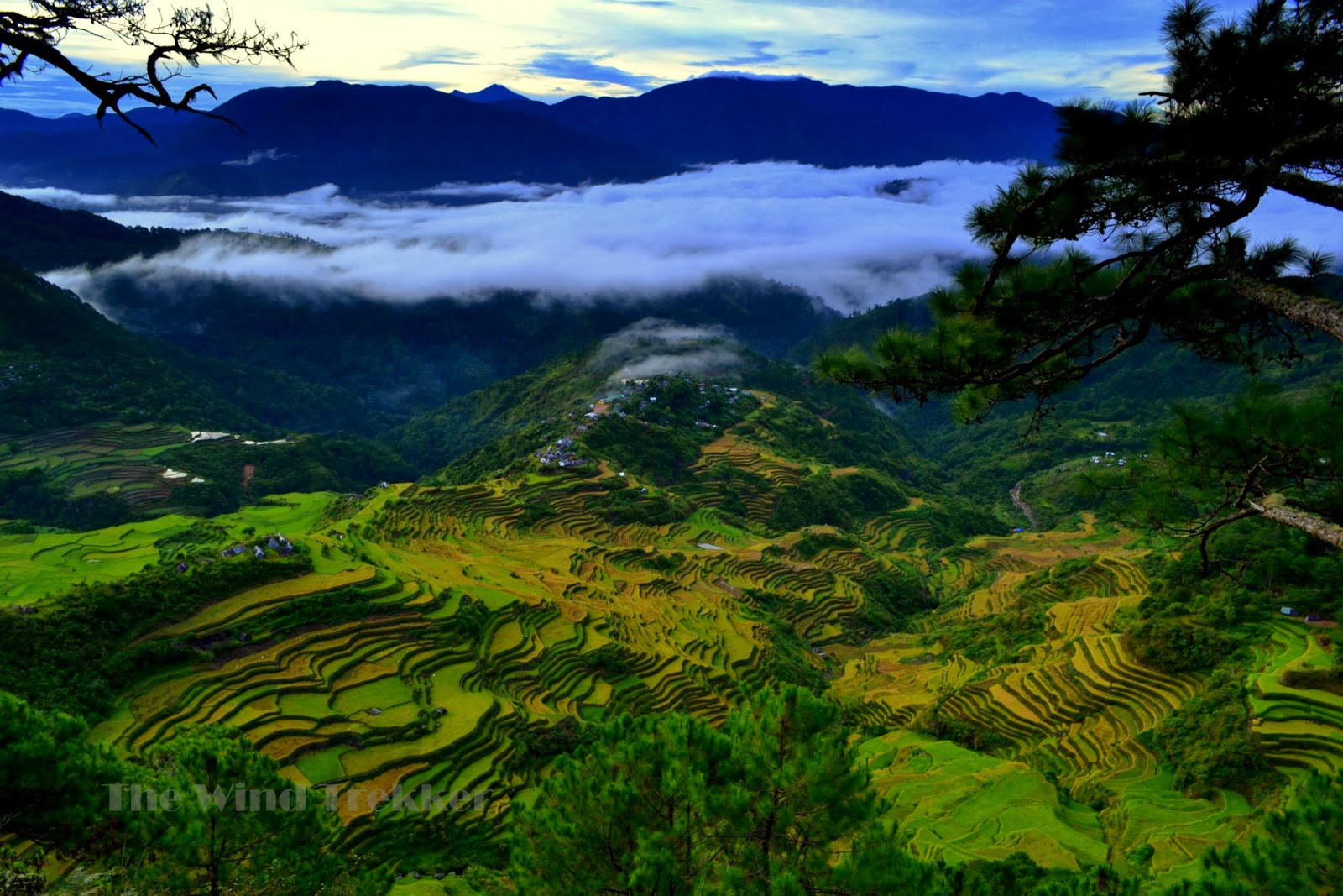The rice terraces of maligcong view from mt kofafey ang for What are terraces