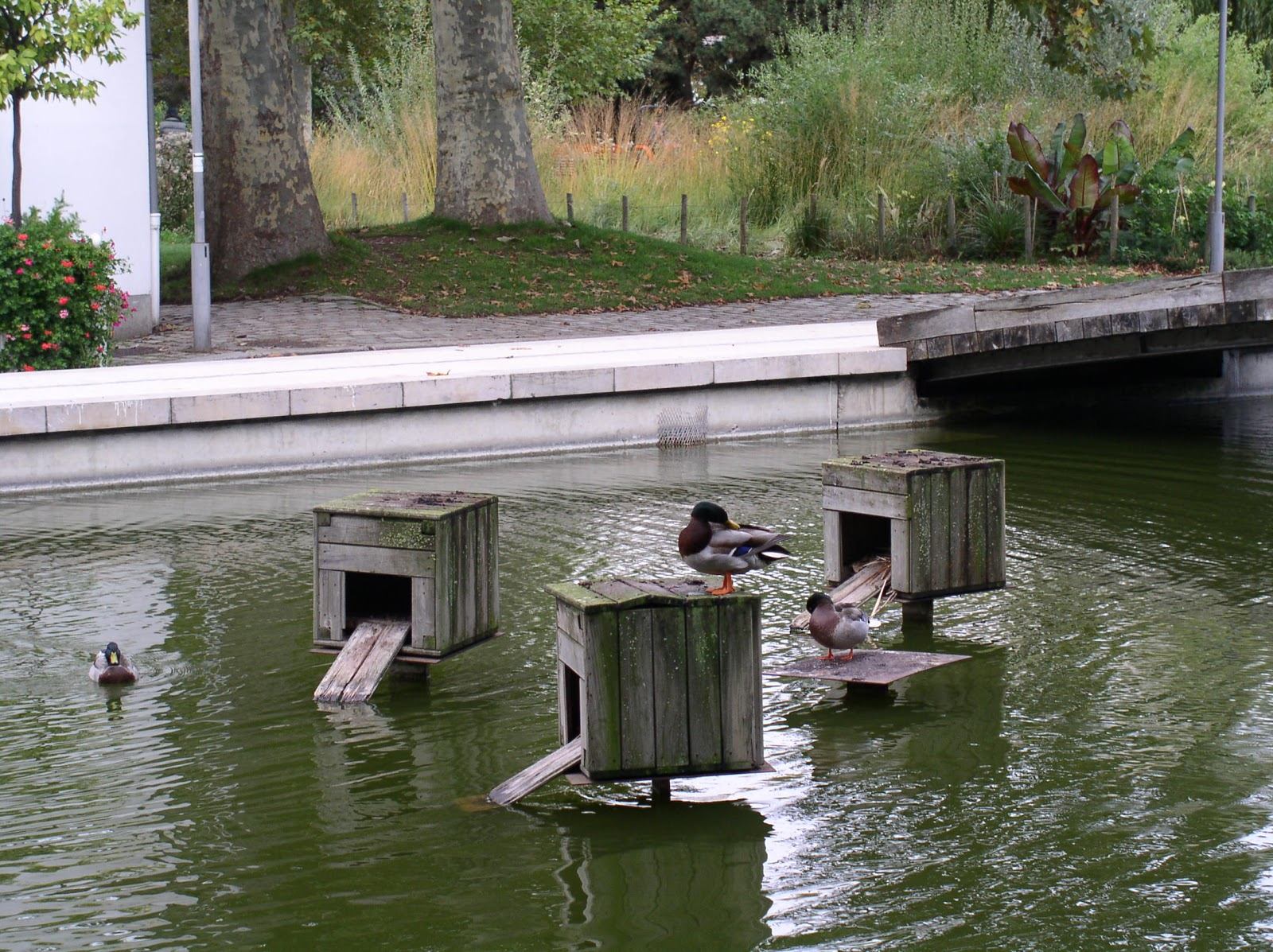 From paris with love parc de bercy for Winter duck house