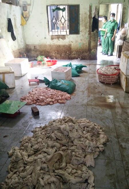 Mỡ và phụ phẩm heo thối được bỏ dưới nền nhà dơ bẩn - Ảnh: Công Nguyên