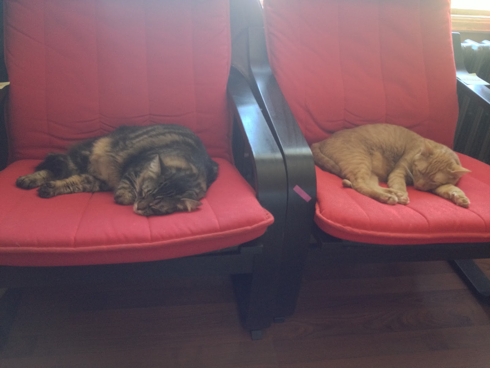 image of cats sleeping on chairs