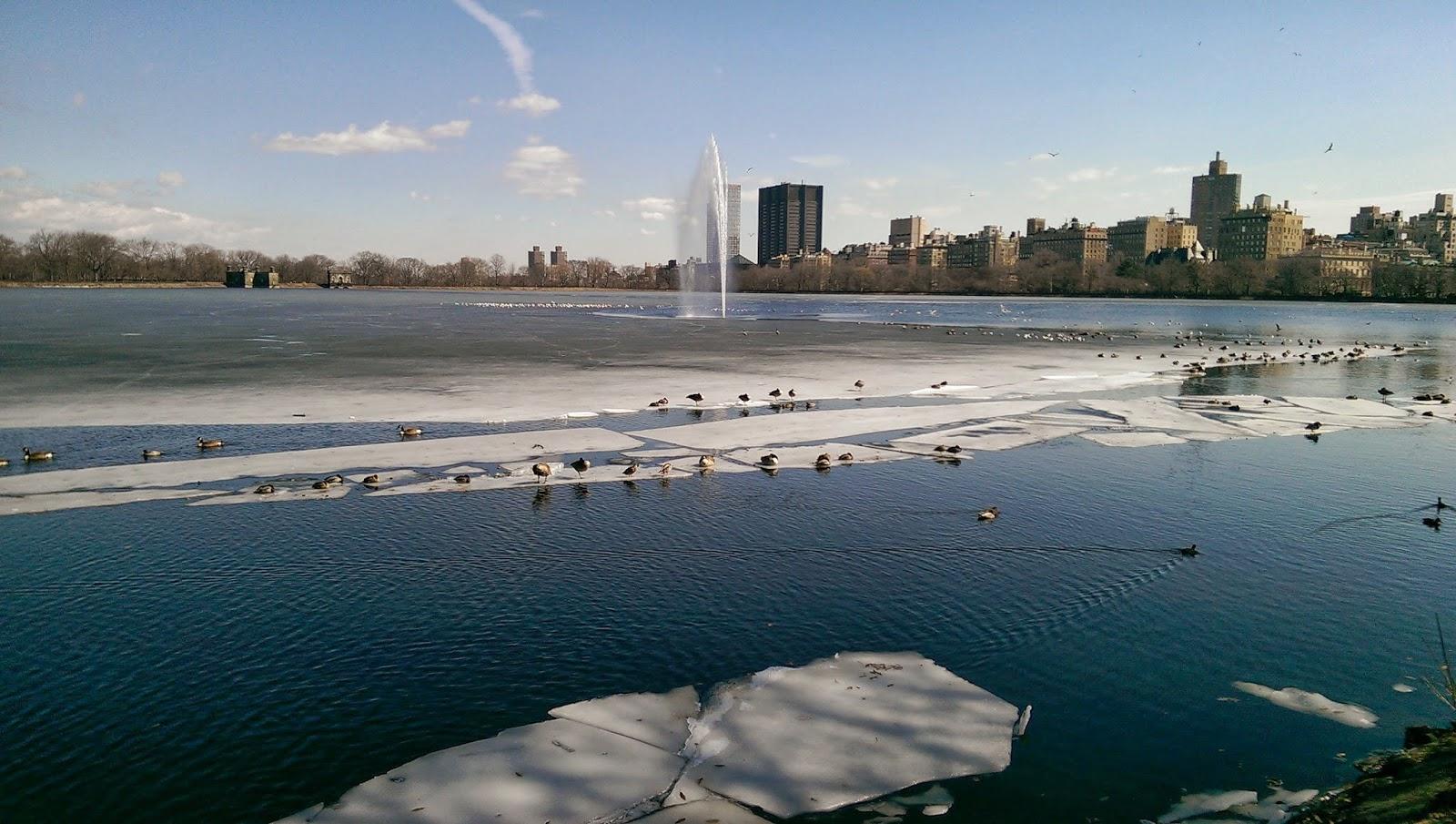 Patos sobre el hielo del Jacqueline Kennedy Onassis Reservoir