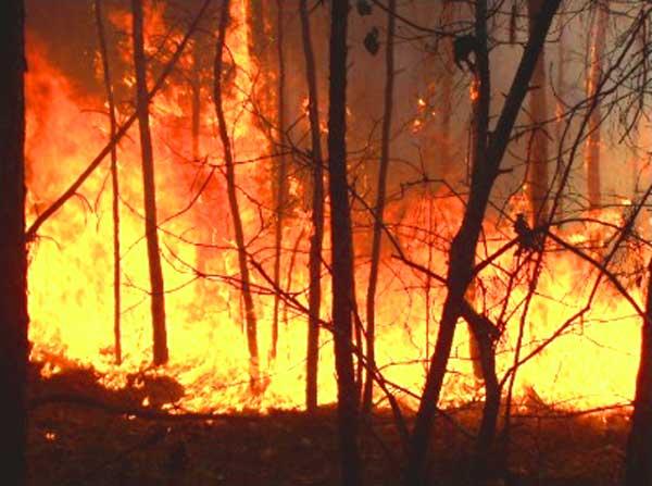Pembakaran lahan yang tidak terkendali sehingga merembet ke lahan lain