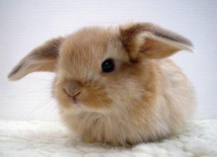 foto kelinci lucu