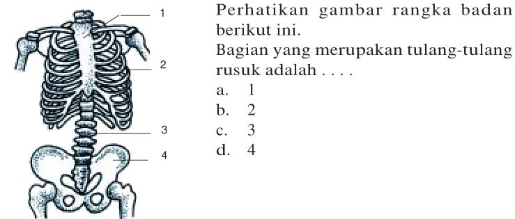Soal Ulangan Harian IPA Kelas 4 Materi Rangka Manusia