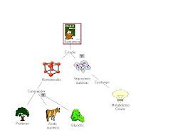 mapa sobre bioquimica
