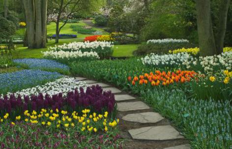 Decora Interi : Plantas Ornamentais e Hortali?as: pragas