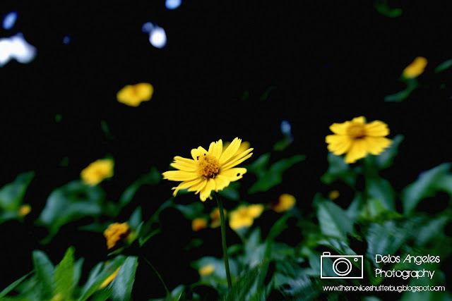 another example of lomography effect using Paint.Net
