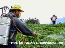 pestisid,herbisid,pengawet,antibiotik,benefits, biozone food purifier, buang toksin, installment plan, promosi, singkir bahan kimia,