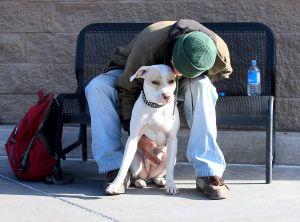 Cuidando un perro