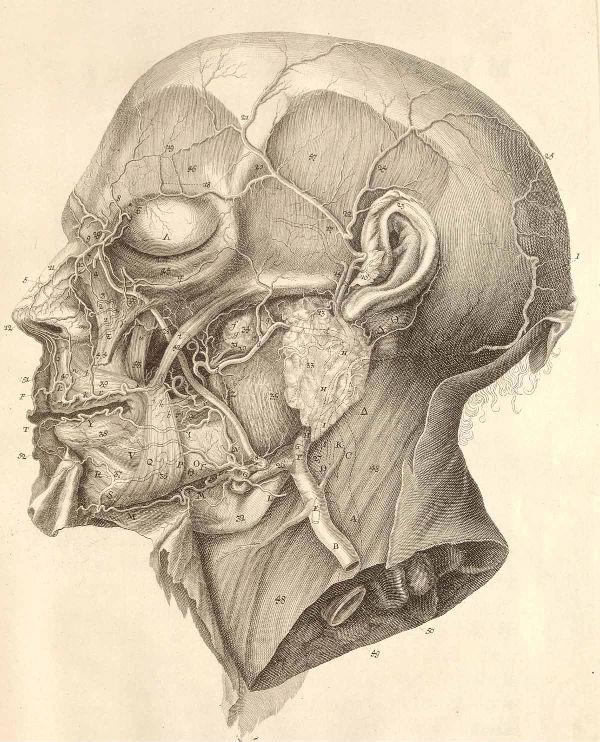 Take on Us....: Anatomy at UVU