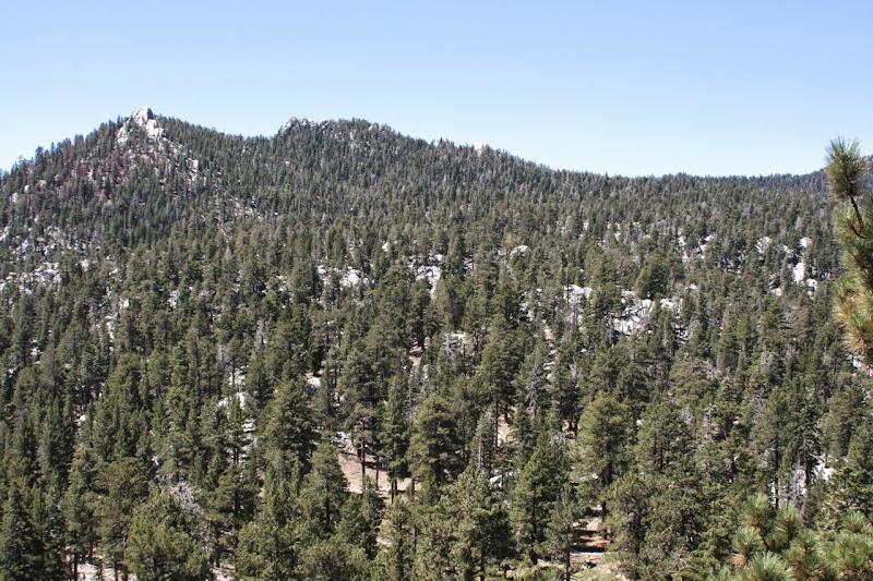 San Jacinto Mountains alpine forest