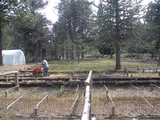 Viveros En Neuquen Of Patagonia Andina Forestal Visitas A Los Viveros