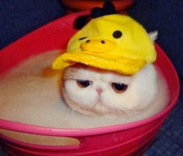 Funny cats - part 89 (40 pics + 10 gifs), cat wears hat taking a bath