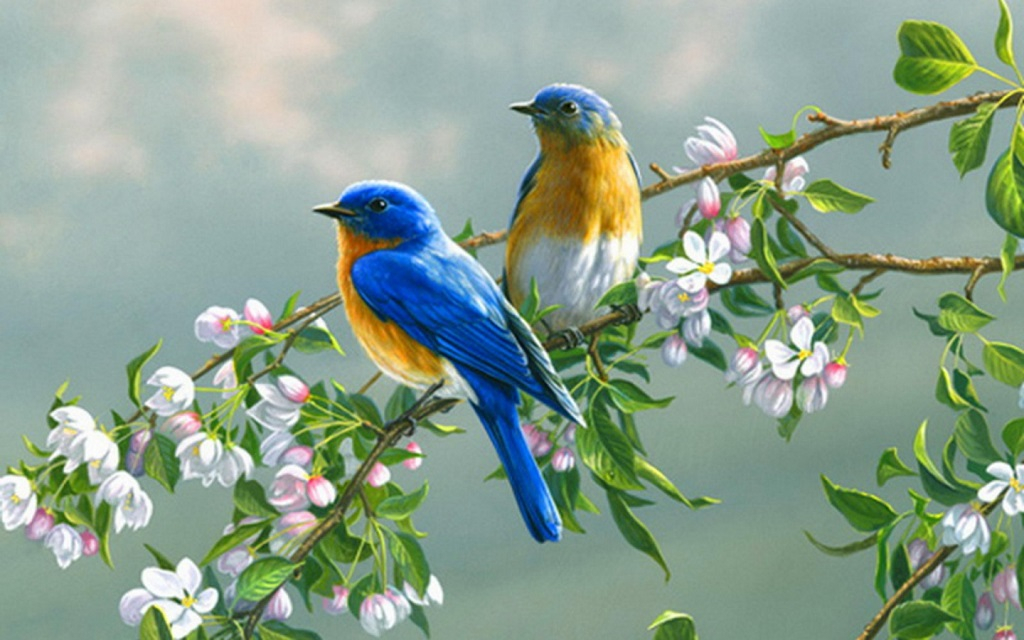 Birds in Love Wallpapers  HD Desktop Wallpaper Collections