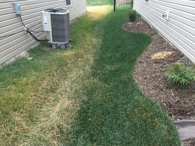 green grass next to yellow grass