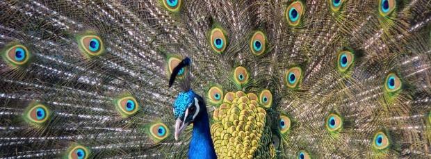 guzel kus facebook kapak resimleri+%25281%2529 35 En Güzel Facebook Kuş Kapak Resimleri indir