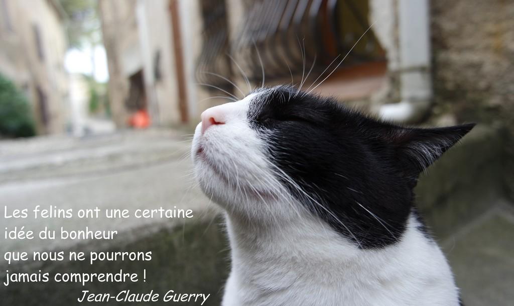 chat bienvenue Villeneuve-d'Ascq