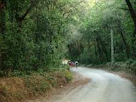 Caminant per dins el Bosc de Can Rimbles