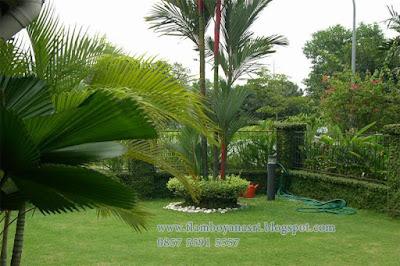 Tukang Taman Surabaya Tentang konsep Desai Taman Minimalis
