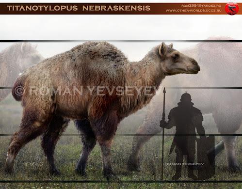 Camelidae fosil Titanotylopus