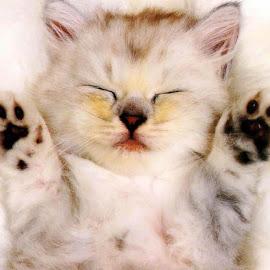 foto kucing terlucu di dunia